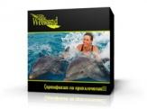 Плавание с дельфинами, сертификат-подарок